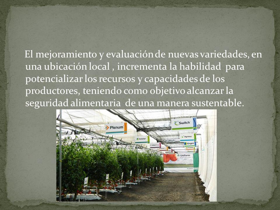 El mejoramiento y evaluación de nuevas variedades, en una ubicación local, incrementa la habilidad para potencializar los recursos y capacidades de lo