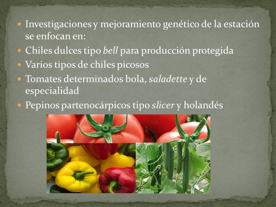 Investigaciones y mejoramiento genético de la estación se enfocan en: Chiles dulces tipo bell para producción protegida Varios tipos de chiles picosos