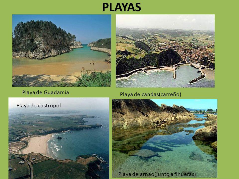 PLAYAS Playa de Guadamia Playa de candas(carreño) Playa de castropol Playa de arnao(junto a fihueras)