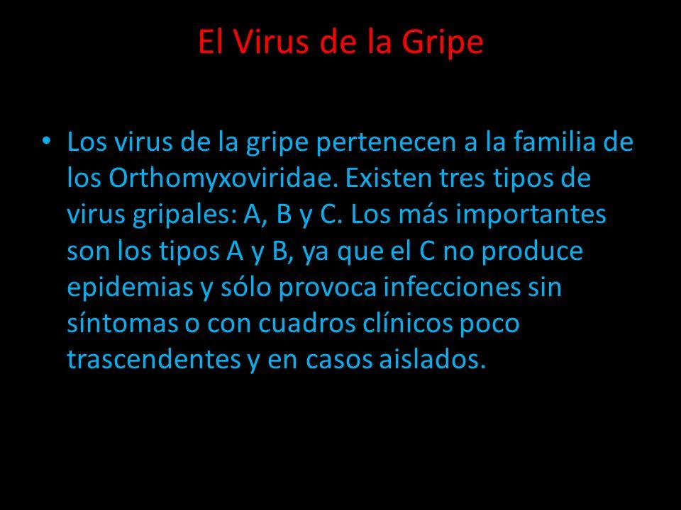 El Virus de la Gripe Los virus de la gripe pertenecen a la familia de los Orthomyxoviridae. Existen tres tipos de virus gripales: A, B y C. Los más im