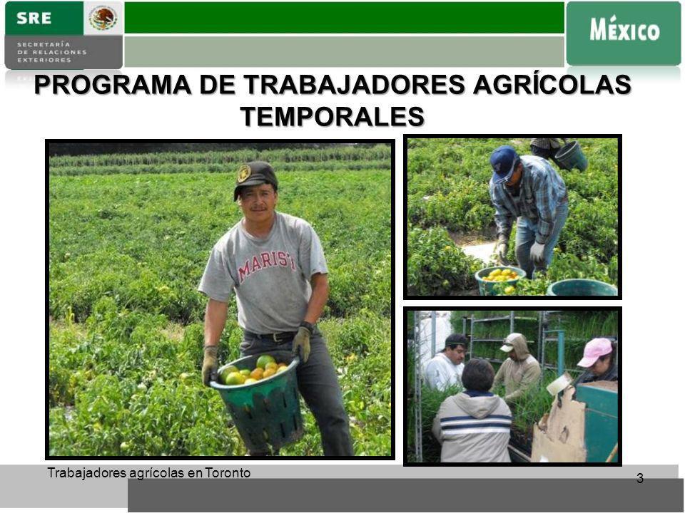 PROGRAMA DE TRABAJADORES AGRÍCOLAS TEMPORALES Trabajadores agrícolas en Toronto 3