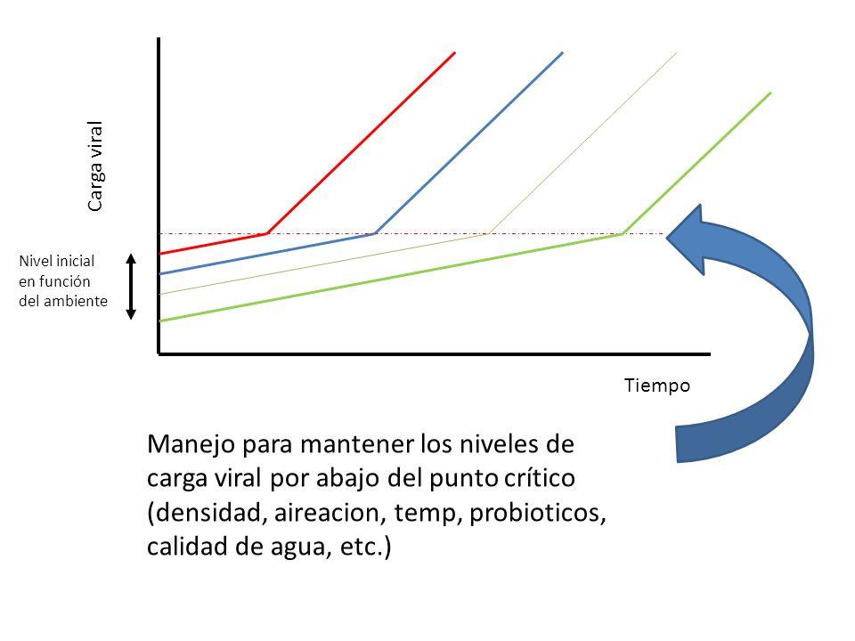 Carga viral Tiempo Nivel inicial en función del ambiente Manejo para mantener los niveles de carga viral por abajo del punto crítico (densidad, aireac