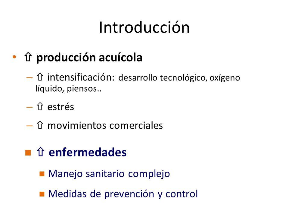 Introducción producción acuícola – intensificación: desarrollo tecnológico, oxígeno líquido, piensos.. – estrés – movimientos comerciales enfermedades