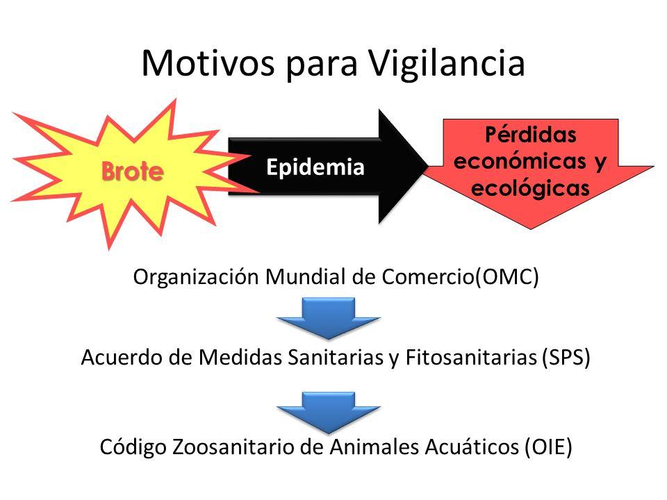 Motivos para Vigilancia en Acuicultura Enfermedades reducen rentabilidad Patógenos limitan comercialización Contexto globalizado Análisis coste-beneficio