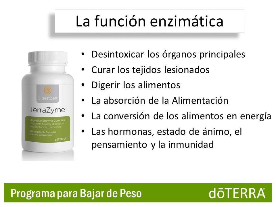 Programa para Bajar de Peso Desintoxicar los órganos principales Curar los tejidos lesionados Digerir los alimentos La absorción de la Alimentación La