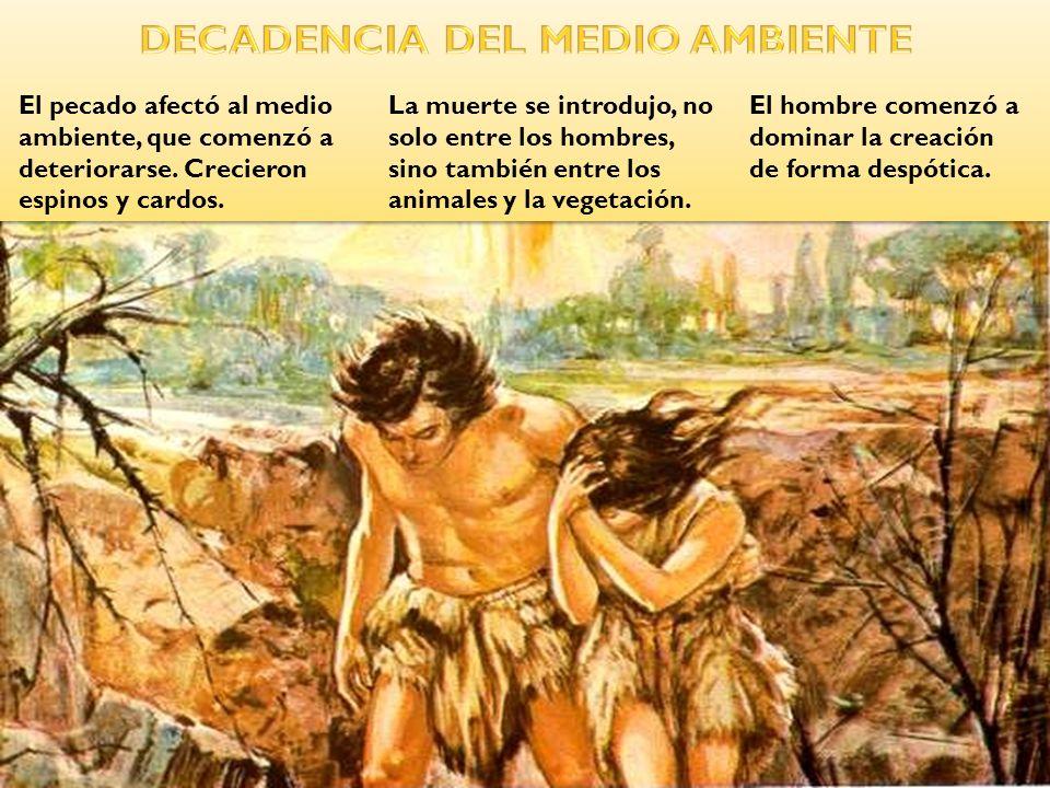El hombre comenzó a dominar la creación de forma despótica. El pecado afectó al medio ambiente, que comenzó a deteriorarse. Crecieron espinos y cardos
