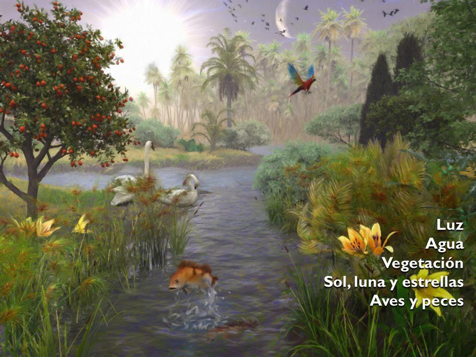 LuzAguaVegetación Aves y peces