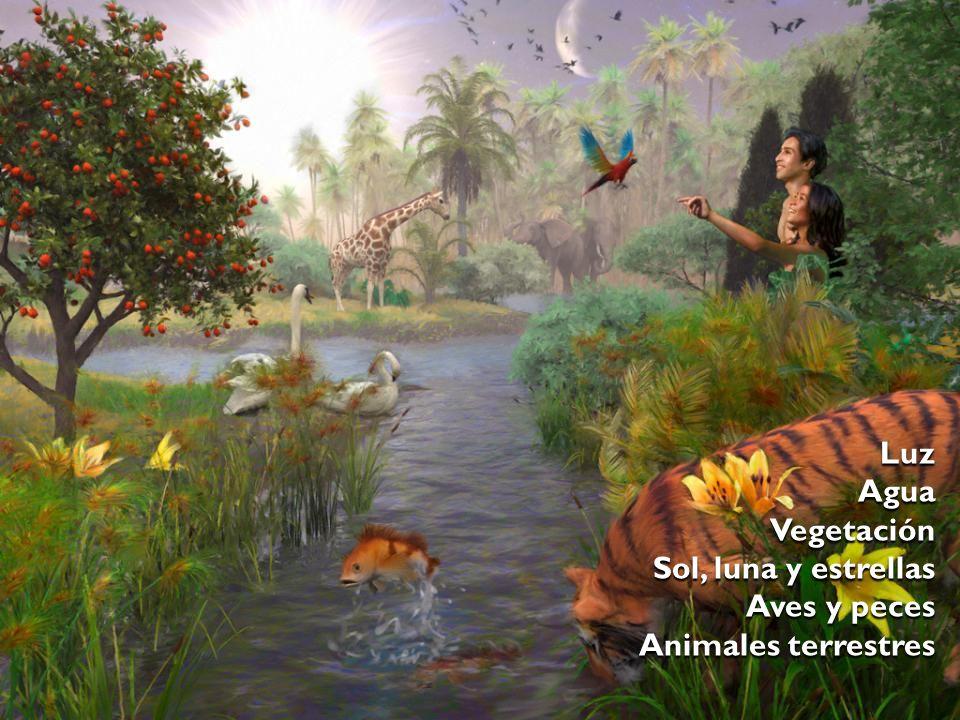 LuzAguaVegetación Sol, luna y estrellas Aves y peces Animales terrestres