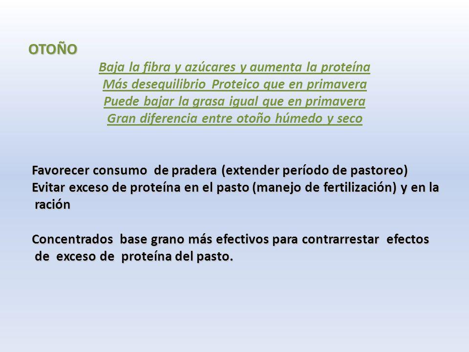 OTOÑO Baja la fibra y azúcares y aumenta la proteína Más desequilibrio Proteico que en primavera Puede bajar la grasa igual que en primavera Gran diferencia entre otoño húmedo y seco Favorecer consumo de pradera (extender período de pastoreo) Favorecer consumo de pradera (extender período de pastoreo) Evitar exceso de proteína en el pasto (manejo de fertilización) y en la Evitar exceso de proteína en el pasto (manejo de fertilización) y en la ración ración Concentrados base grano más efectivos para contrarrestar efectos Concentrados base grano más efectivos para contrarrestar efectos de exceso de proteína del pasto.