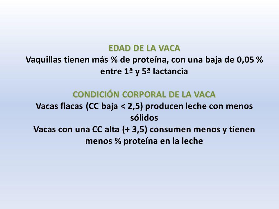 EDAD DE LA VACA CONDICIÓN CORPORAL DE LA VACA EDAD DE LA VACA Vaquillas tienen más % de proteína, con una baja de 0,05 % entre 1ª y 5ª lactancia CONDICIÓN CORPORAL DE LA VACA Vacas flacas (CC baja < 2,5) producen leche con menos sólidos Vacas con una CC alta (+ 3,5) consumen menos y tienen menos % proteína en la leche