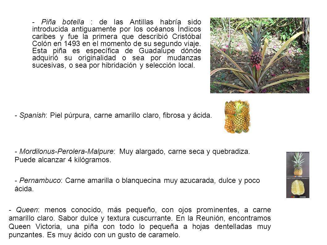 Piña cruda (valor nutritivo para 100g) agua: 87,24 g cenizas totales: 0,27 g fibras: 1,4 g valor energético: 45 kcal proteínas: 0,55 g lípidos: 0,13 g glúcidos: 11,82 g azúcar simple: 8,29 g oligoelementos calcio: 13 mg hierro: 0,25 mg magnesio: 12 mg fósforo: 9 mg potasio: 125 mg cobre: 0,081 mg sodio: 1 mg cinc: 0,08 mg vitaminas vitamina C: 16,9 mg vitamina B1: 0,078 mg vitamina B2: 0,029 mg vitamina B3: 0,470 mg vitamina B5: 0,193 mg vitamina B6: 0,106 mg vitamina B9: 11 µg vitamina B12: 0,00 µg vitamina A: 52 tipos de UI retinol: 3 µg vitamina E: 0,00 µg vitamina K: 0,7 µg ácidos grasos saturados: 0,009 g monoinsaturados: 0,013 g poly-insaturados: 0,040 g colesterol: 0 mg Aportes en calorías o vitaminas o minerales CHARLENE