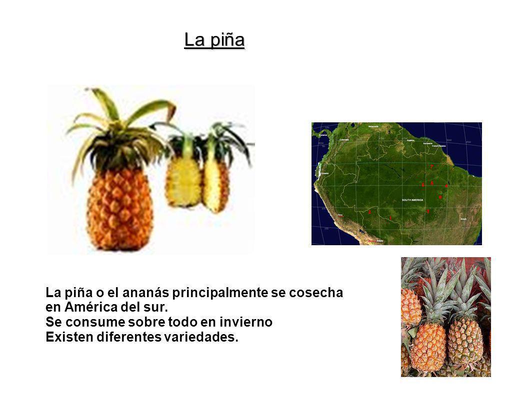 La piña La piña o el ananás principalmente se cosecha en América del sur. Se consume sobre todo en invierno Existen diferentes variedades.
