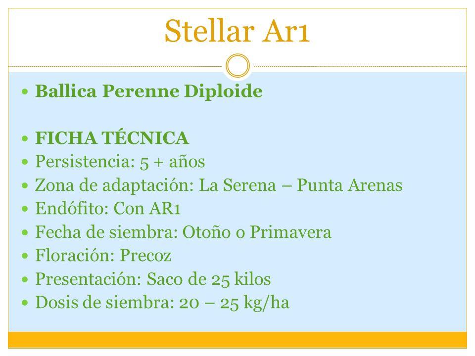 Stellar Ar1 Ballica Perenne Diploide FICHA TÉCNICA Persistencia: 5 + años Zona de adaptación: La Serena – Punta Arenas Endófito: Con AR1 Fecha de siem