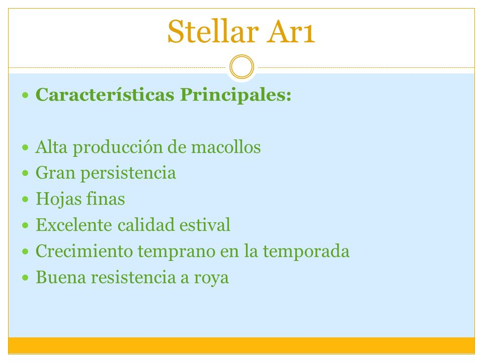 Stellar Ar1 Características Principales: Alta producción de macollos Gran persistencia Hojas finas Excelente calidad estival Crecimiento temprano en l