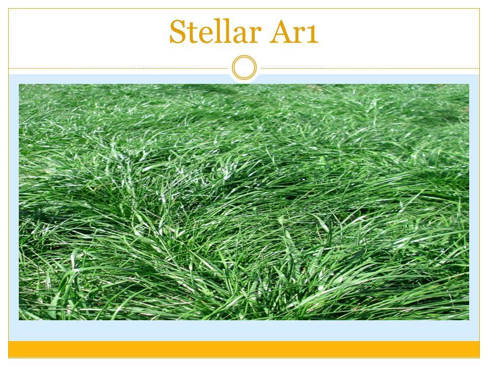 Stellar Ar1