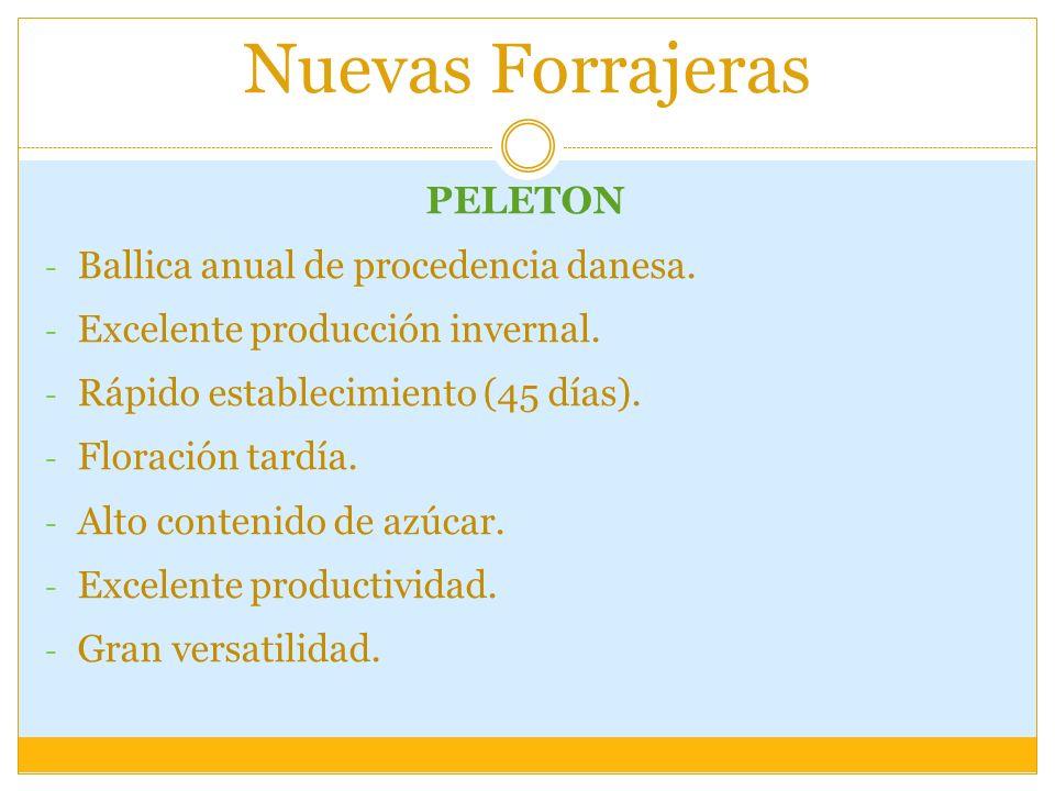 Nuevas Forrajeras PELETON - Ballica anual de procedencia danesa. - Excelente producción invernal. - Rápido establecimiento (45 días). - Floración tard