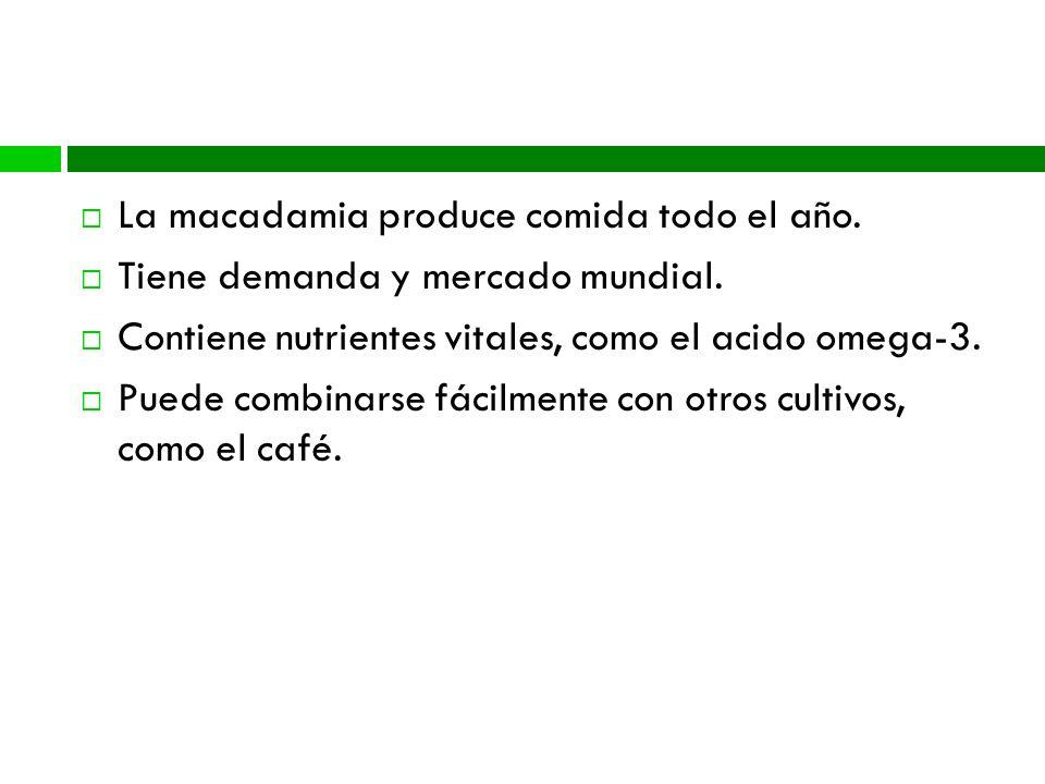 Seguridad Alimentaria La macadamia produce comida todo el año.