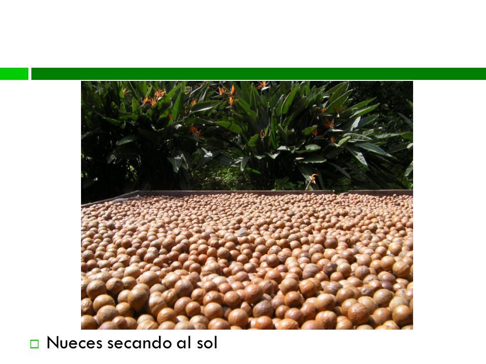 Proceso Nueces secando al sol