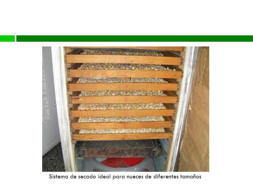 Proceso Sistema de secado ideal para nueces de diferentes tamaños