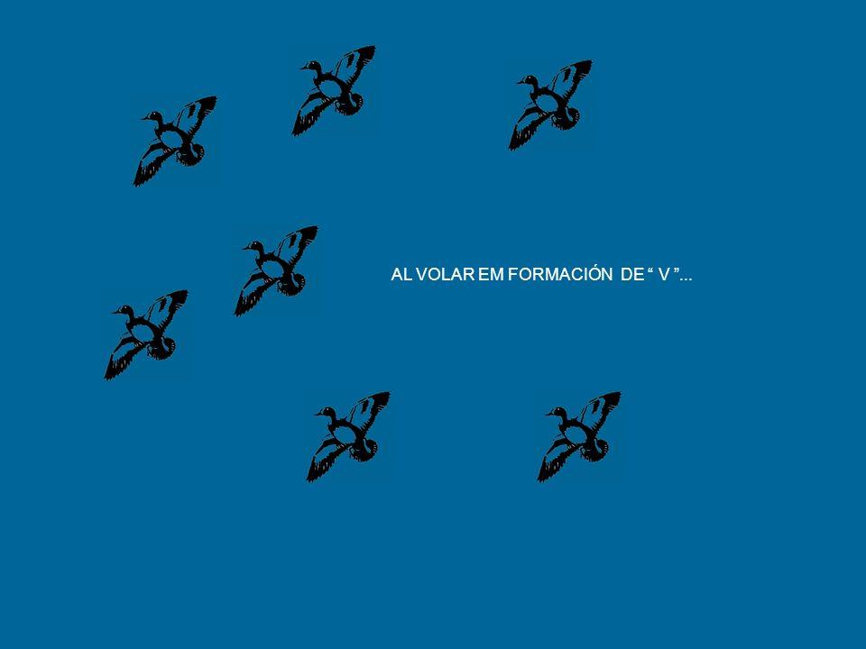 LOS GANSOS VOLANDO EN FORMACIÓN GRASNAM PARA DAR CORAJE Y ALENTO A LOS QUE VUELAN EN EL FRENTE, PARA QUE ASI MANTENGAN LA VELOCIDADE.