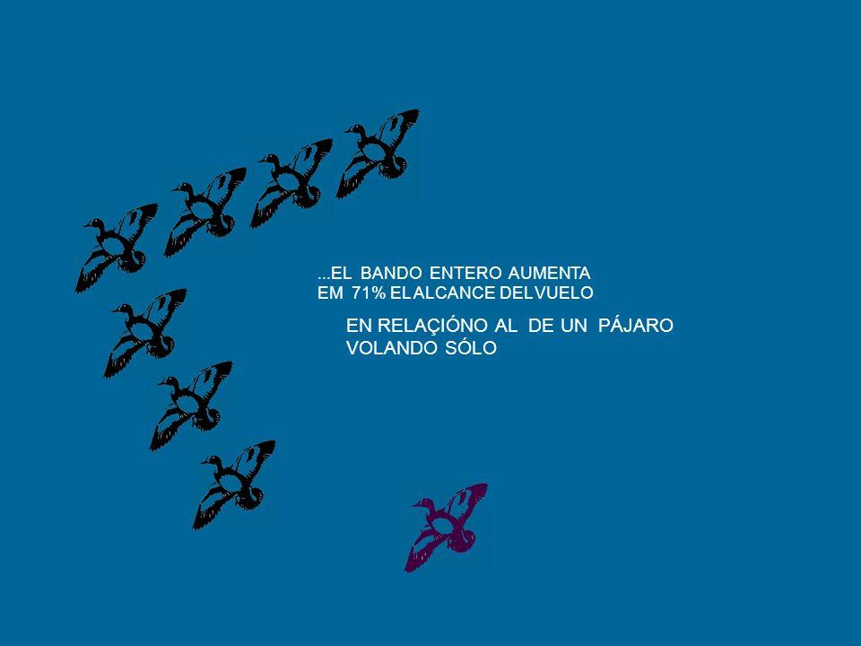 ...EL BANDO ENTERO AUMENTA EM 71% EL ALCANCE DEL VUELO EN RELAÇIÓNO AL DE UN PÁJARO VOLANDO SÓLO