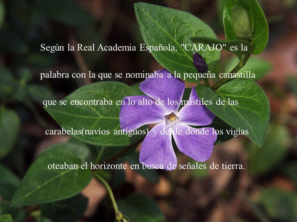 Según la Real Academia Española,