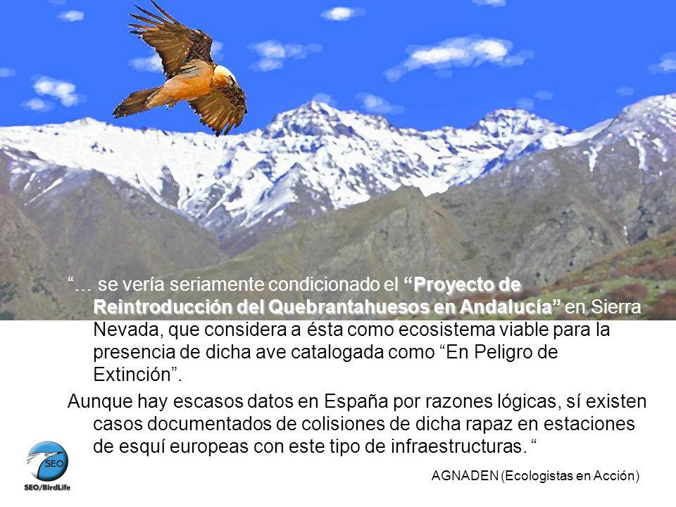 Proyecto de Reintroducción del Quebrantahuesos en Andalucía … se vería seriamente condicionado el Proyecto de Reintroducción del Quebrantahuesos en An
