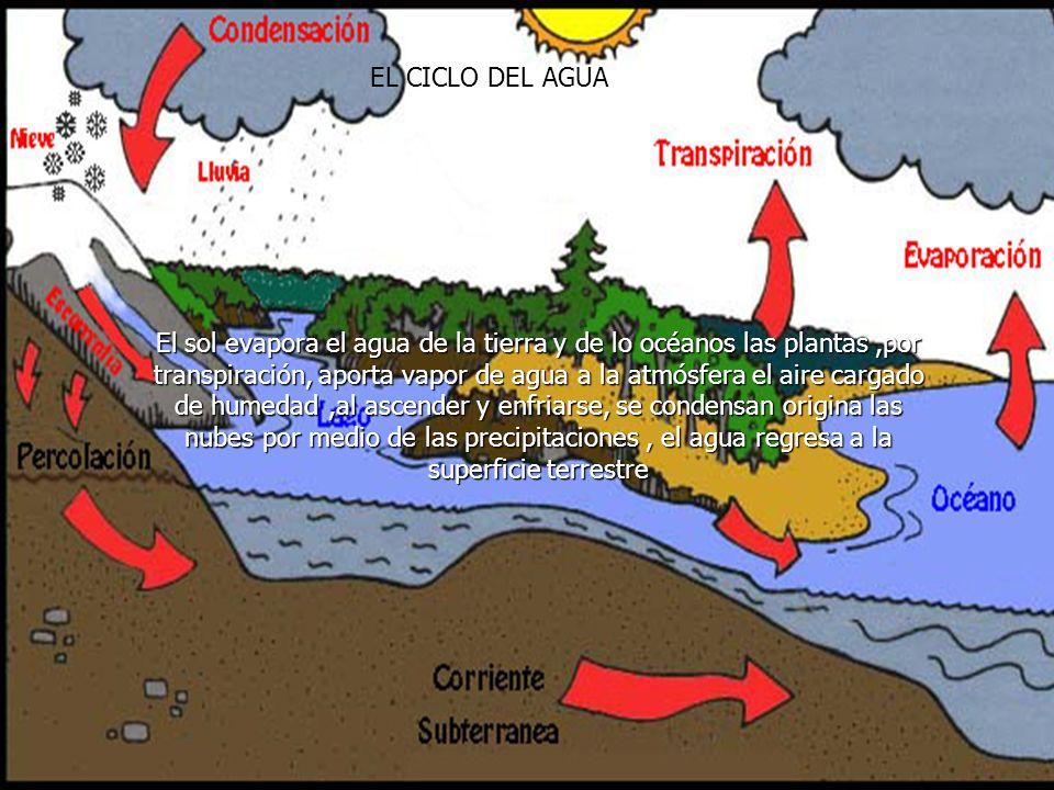 EL CICLO DEL AGUA El sol evapora el agua de la tierra y de lo océanos las plantas,por transpiración, aporta vapor de agua a la atmósfera el aire cargado de humedad,al ascender y enfriarse, se condensan origina las nubes por medio de las precipitaciones, el agua regresa a la superficie terrestre