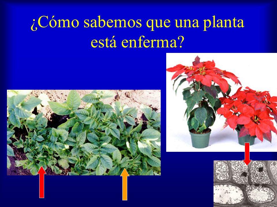 ¿Cómo sabemos que una planta está enferma? Signo manifestación del patógeno