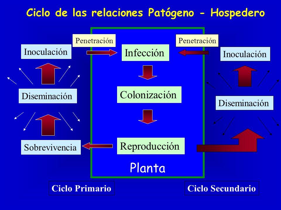 ¿Cómo causa enfermedad el agente patogénico.