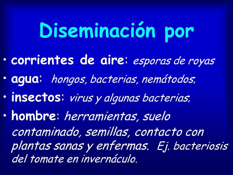 Diseminación a través de órganos de reproducción o de propagación vegetativa.