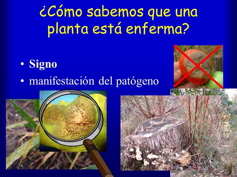 ¿Cómo sabemos que una planta está enferma? Síntoma manifestación de la planta