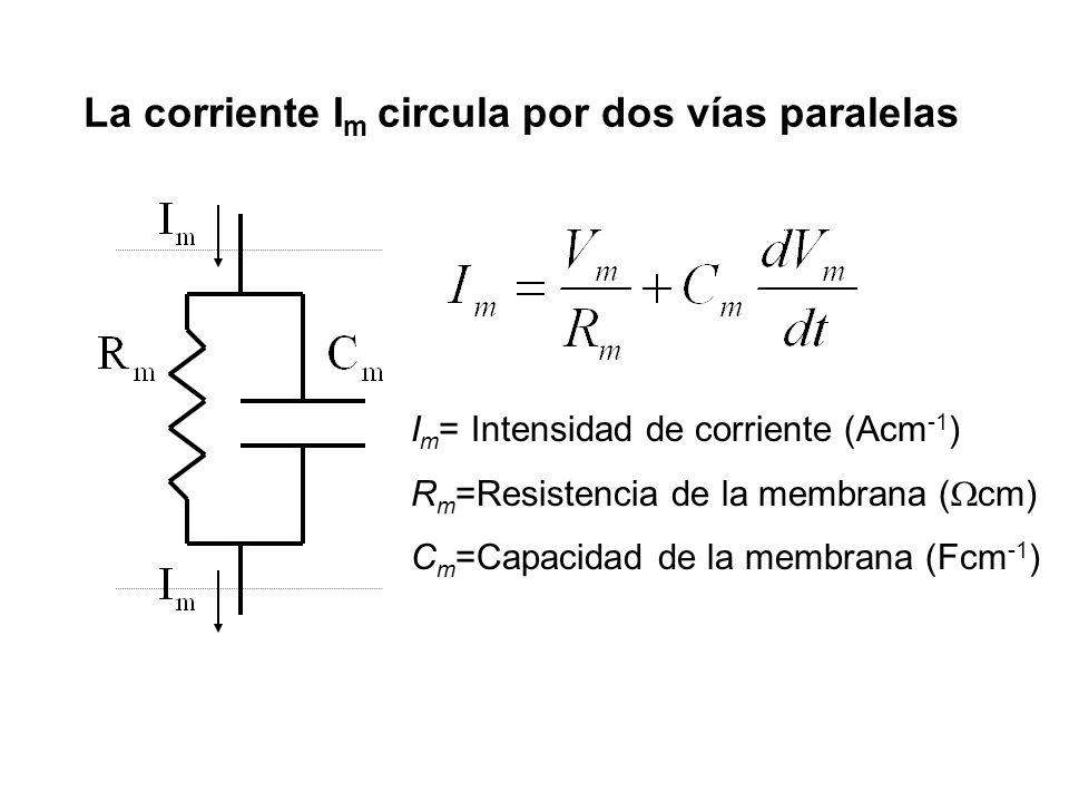 La corriente I m circula por dos vías paralelas I m = Intensidad de corriente (Acm -1 ) R m =Resistencia de la membrana ( cm) C m =Capacidad de la mem