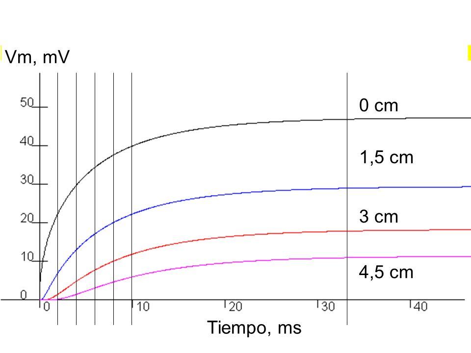 0 cm 1,5 cm 3 cm 4,5 cm Tiempo, ms Vm, mV