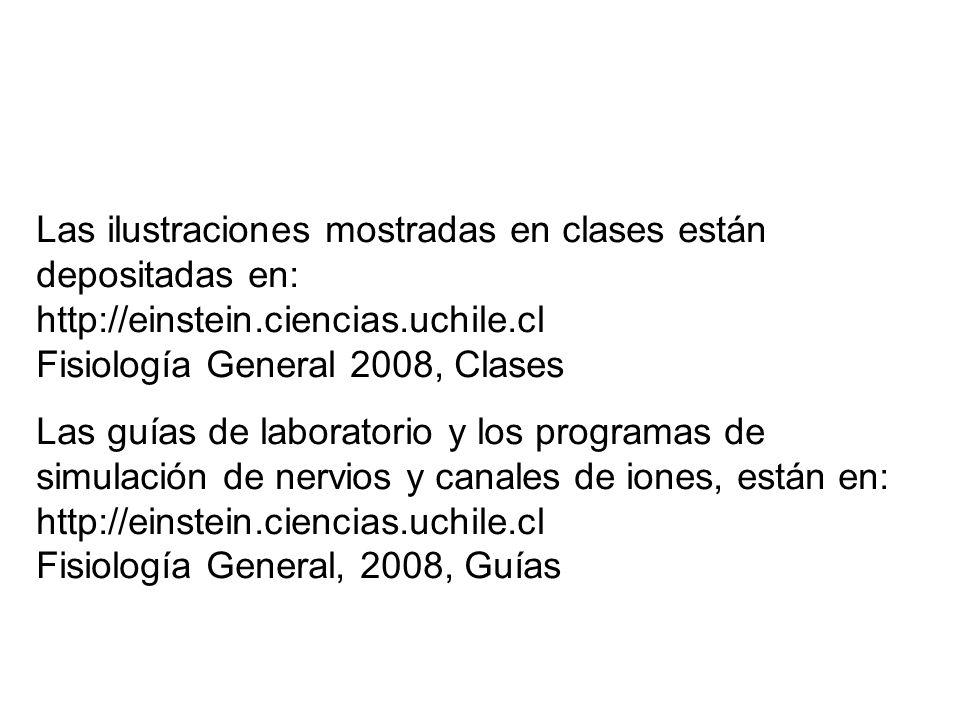 Las ilustraciones mostradas en clases están depositadas en: http://einstein.ciencias.uchile.cl Fisiología General 2008, Clases Las guías de laboratori
