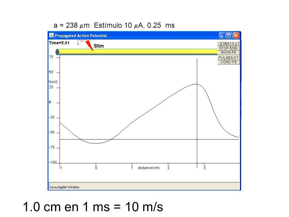 1.0 cm en 1 ms = 10 m/s