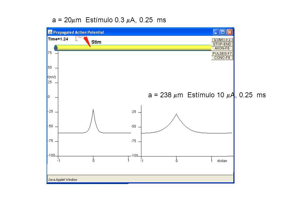 a = 20 m Estímulo 0.3 A, 0.25 ms a = 238 m Estímulo 10 A, 0.25 ms