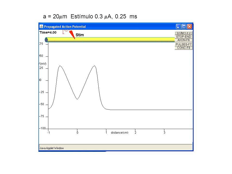 a = 20 m Estímulo 0.3 A, 0.25 ms