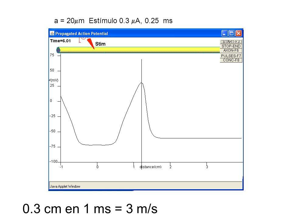 0.3 cm en 1 ms = 3 m/s
