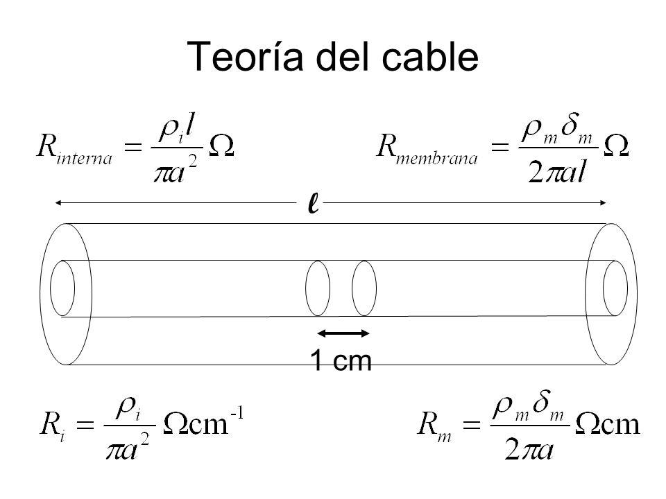 Teoría del cable l 1 cm