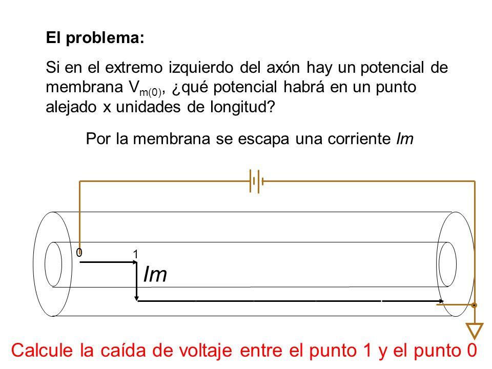 El problema: Si en el extremo izquierdo del axón hay un potencial de membrana V m(0), ¿qué potencial habrá en un punto alejado x unidades de longitud?