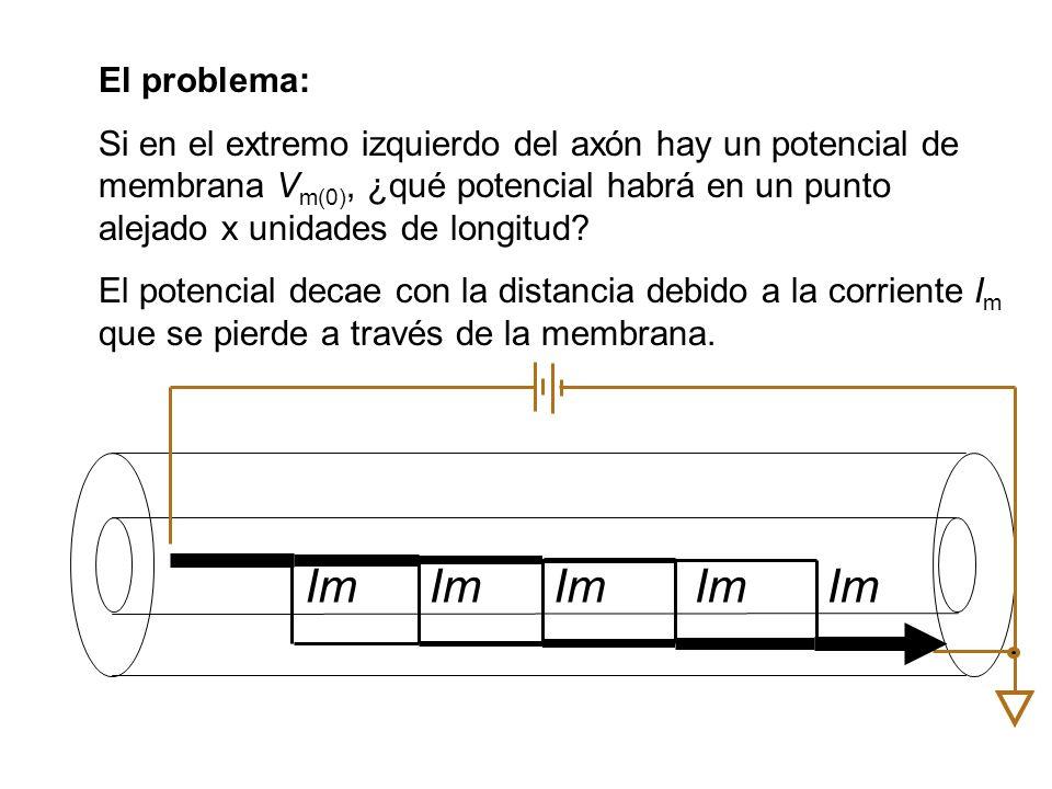 El problema: Si en el extremo izquierdo del axón hay un potencial de membrana V m(0), ¿qué potencial habrá en un punto alejado x unidades de longitud.