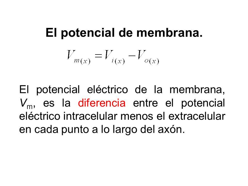 El potencial de membrana. El potencial eléctrico de la membrana, V m, es la diferencia entre el potencial eléctrico intracelular menos el extracelular