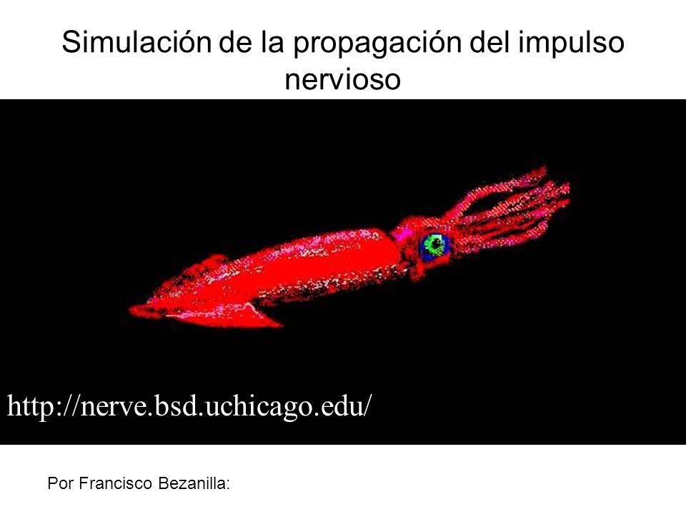 http://nerve.bsd.uchicago.edu/ Simulación de la propagación del impulso nervioso Por Francisco Bezanilla: