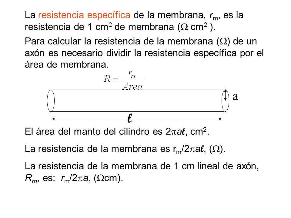 La resistencia específica de la membrana, r m, es la resistencia de 1 cm 2 de membrana ( cm 2 ). Para calcular la resistencia de la membrana ( ) de un