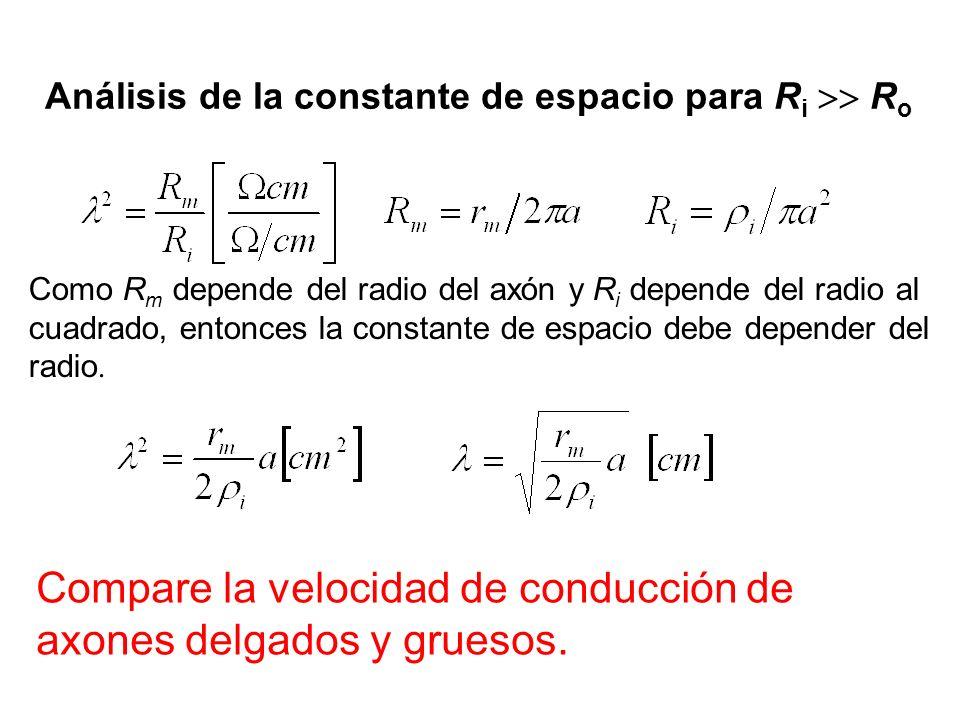 Análisis de la constante de espacio para R i R o Como R m depende del radio del axón y R i depende del radio al cuadrado, entonces la constante de esp