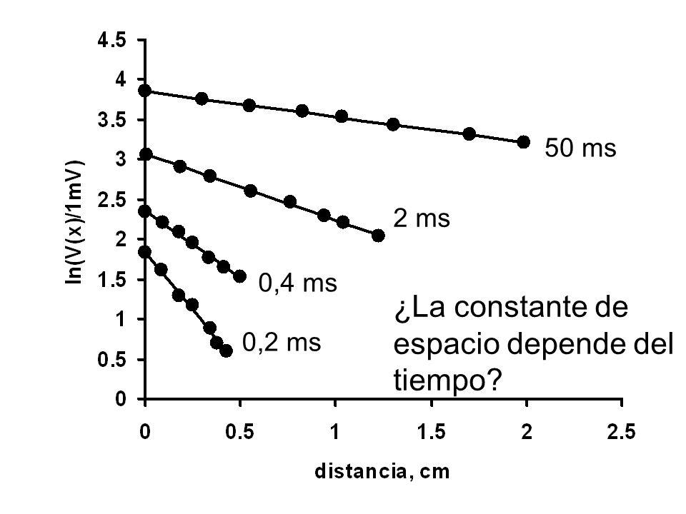 0,2 ms 2 ms 0,4 ms 50 ms ¿La constante de espacio depende del tiempo?