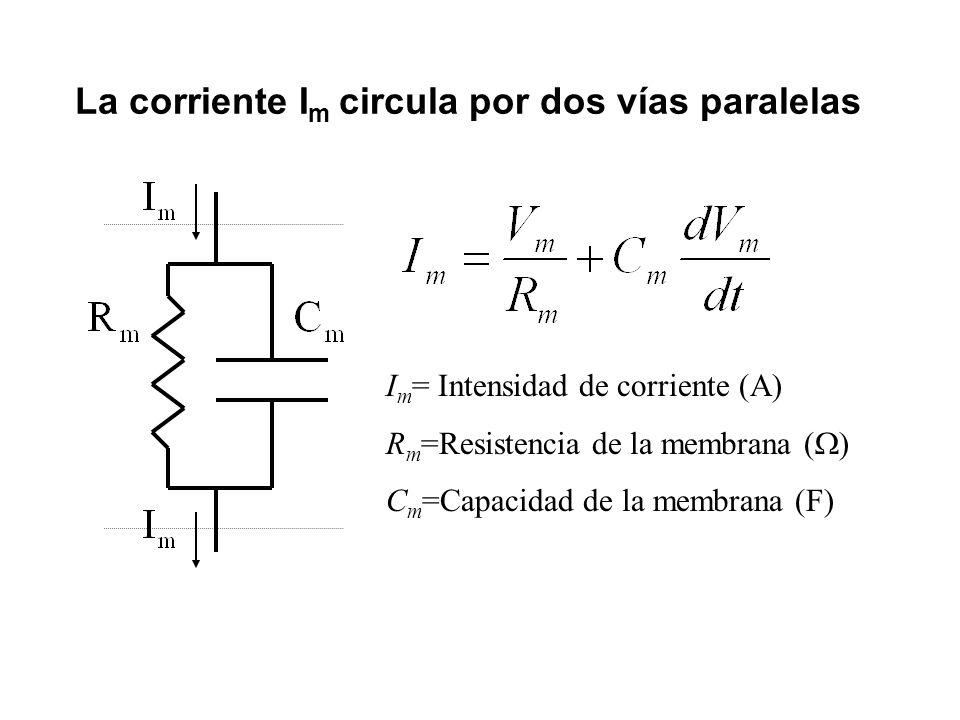 La corriente I m circula por dos vías paralelas I m = Intensidad de corriente (A) R m =Resistencia de la membrana ( ) C m =Capacidad de la membrana (F)