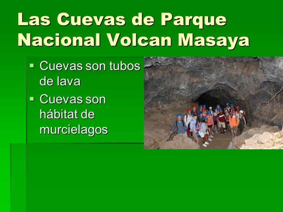 Las Cuevas de Parque Nacional Volcan Masaya Cuevas son tubos de lava Cuevas son tubos de lava Cuevas son hábitat de murcielagos Cuevas son hábitat de murcielagos
