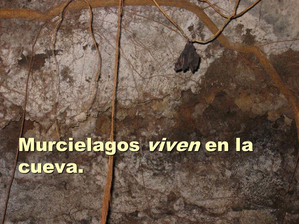Murcielagos viven en la cueva.